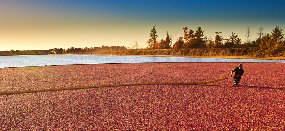 10 Things You Need to Know About Cranberry
